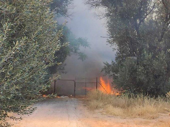 Πυρκαγιά σε χαμηλή βλάστηση στην Κηφισιά