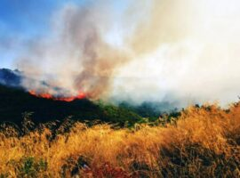 Πυρκαγιά ΤΩΡΑ σε δασική έκταση στη Βρύναινα Μαγνησίας