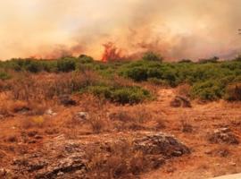 Πυρκαγιά ΤΩΡΑ σε δασικη εκταση στην περιοχή Αγία Παρασκευή Βοιωτίας (Φωτο)