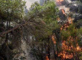 Πυρκαγιά σε δασική έκταση στον Χολομώντα Χαλκιδικής
