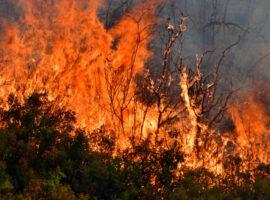 Πυρκαγιά ΤΩΡΑ εν υπαίθρω  σε  επί της Λεωφόρου Σχιστού στο Πέραμα Αττικής