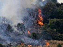 Πυρκαγιά σε δασική έκταση στη Χασιά Αττικής