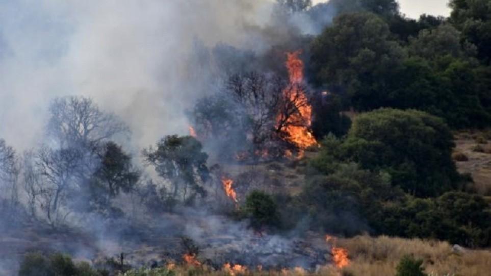 Πυρκαγιά σε δασική έκταση στην περιοχή του Σουφλίου στον Έβρο