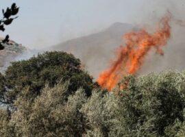 Πυρκαγιά σε ελαιώνα στην περιοχή Ασκληπίου Αργολίδας