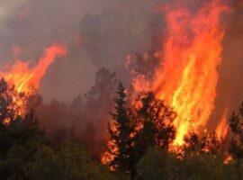 Πυρκαγιά ΤΩΡΑ σε δασική έκταση στην περιοχή Πάνδροσος Ροδόπης