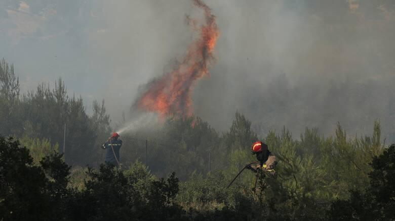 Πυρκαγιά ΤΩΡΑ σε χαμηλή βλάστηση στην περιοχή Πετρομάγουλο Διμηνίου Μαγνησίας