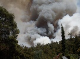 46 Δασικές πυρκαγιές εκδηλώθηκαν το τελευταίο 24ωρο