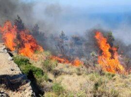 Πυρκαγια σε γεωργική έκταση στα Μαλάματα Φωκίδας