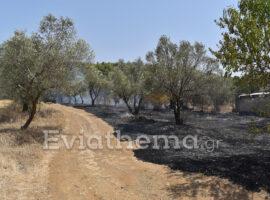 Πυρκαγιά εν υπαίθρω στην περιοχή Τριάδα Ευβοίας