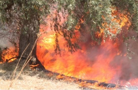 Ενημέρωση για τις δασικές πυρκαγιές που εκδηλώθηκαν στην Άνω Βαρυμπόμπη Αττικής, στην Εύβοια στη Μεσσηνία και στην Ανατολική Μάνη.