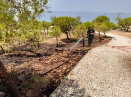 Πυρκαγιά σε χαμηλή βλάστηση στο Καβούρι Αττικής (Φώτο)