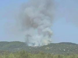 Πυρκαγιά σε δασική έκταση στην Τορώνη Χαλκιδική (Φώτο)