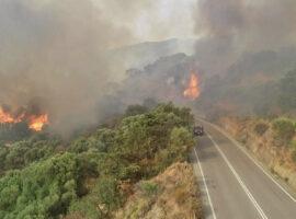 Πυρκαγια ΤΩΡΑ σε δασική έκταση στην περιοχή Φλόκα Ηλείας
