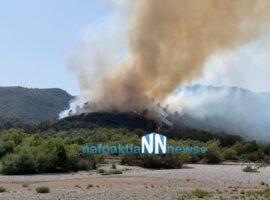 Πυρκαγιά ΤΩΡΑ σε δασική έκταση στο Παραδείσι Αιτωλοακαρνανίας (Φώτο)