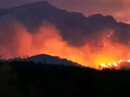 Πυρκαγιά σε δασική έκταση στην Πετρούπολη Αττικής