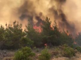 Πυρκαγιά σε αγροτοδασική έκταση στην Μεσσηνία