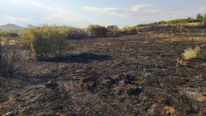 Πυρκαγιά σε καλαμιές και ξερά χόρτα στη Νέα Αγχίαλο