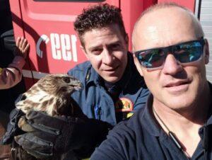 Διάσωση γερακιού στην Τήνο από την Πυροσβέστικη