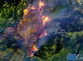 Πυρκαγιές στην Καλιφόρνια: Πολύ κοντά στο μεγαλύτερο δέντρο της Γης
