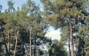 Παράταση απαγόρευσης μετακίνησης σε δάση, άλση και περιοχές NATURA