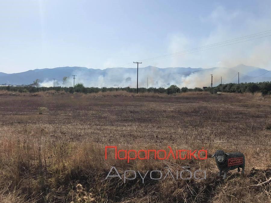 Πυρκαγιά εν υπαίθρω κοντά στην Πάνιτσα Αργολίδας