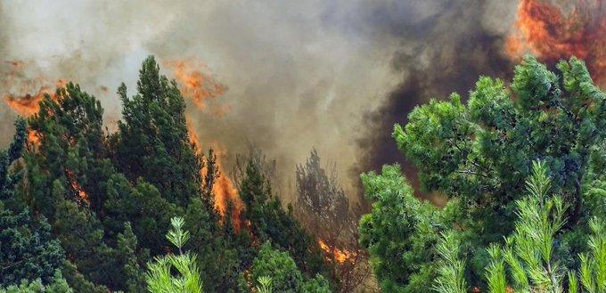 Πυροσβεστική: 31 δασικές πυρκαγιές το τελευταίο 24ωρο