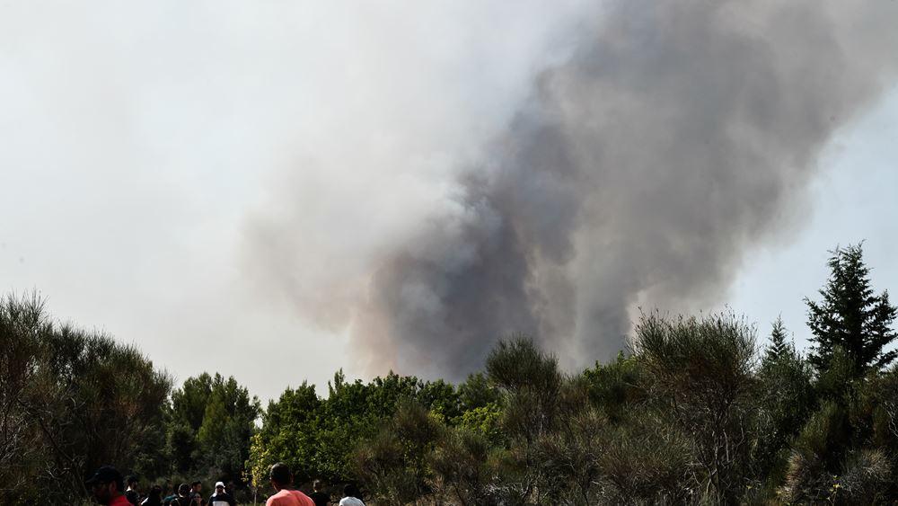 Πυρκαγιά ΤΩΡΑ σε δασική έκταση στην περιοχή Λιβαδάκια στη Λαμία