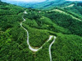 Απόφαση Συμβουλίου της Επικρατείας για τους δασικούς χάρτες