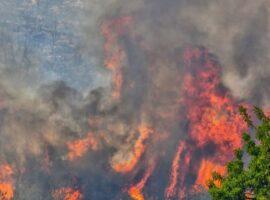 Μεγάλη πυρκαγιά ΤΩΡΑ στη Θεσπρωτία