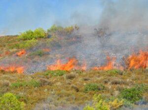 Μεγάλη πυρκαγιά ΤΩΡΑ στο Μαρκόπουλο Αττικής