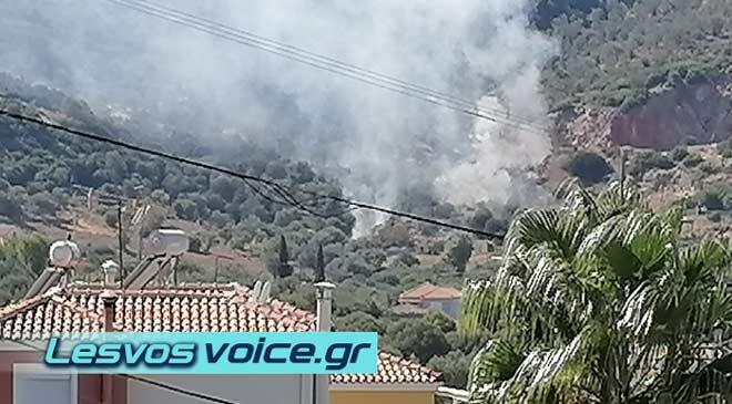 Πυρκαγιά σε δασική έκταση στον Γαϊδαρανήφορο στη Μυτιλήνη (Φωτο)