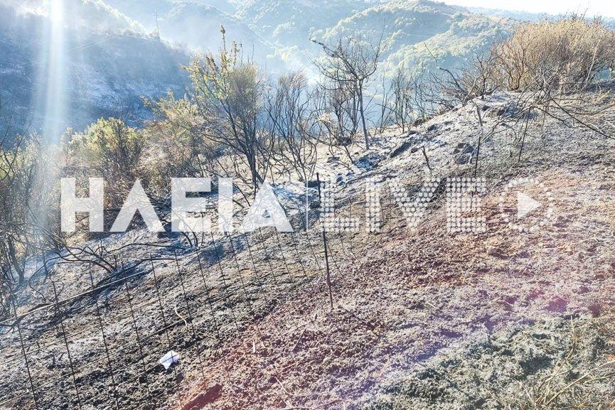 Ηλεία - Στάχτη 150 στρέμματα στα Άγνατα από τη νυχτερινή πυρκαγιά (Φωτό)
