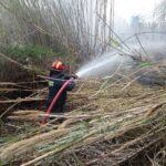 Πυροσβεστική: 6 δασικές πυρκαγιές το τελευταίο 24ωρο