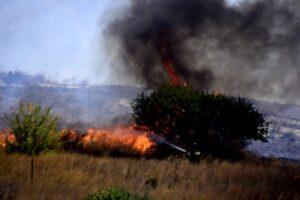 Πυρκαγιά σε εξέλιξη σε χορτολιβαδική έκταση στην Τανάγρα