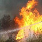 Πυρκαγιά σε χωράφι με καλλιέργεια βαμβακιού στην περιοχή του Ριζομύλου Μαγνησίας